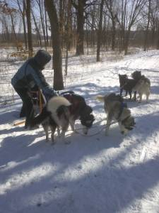 Dogs and Sleds at McKee