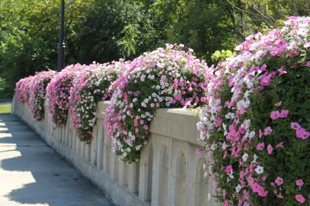 Bridge Flowers
